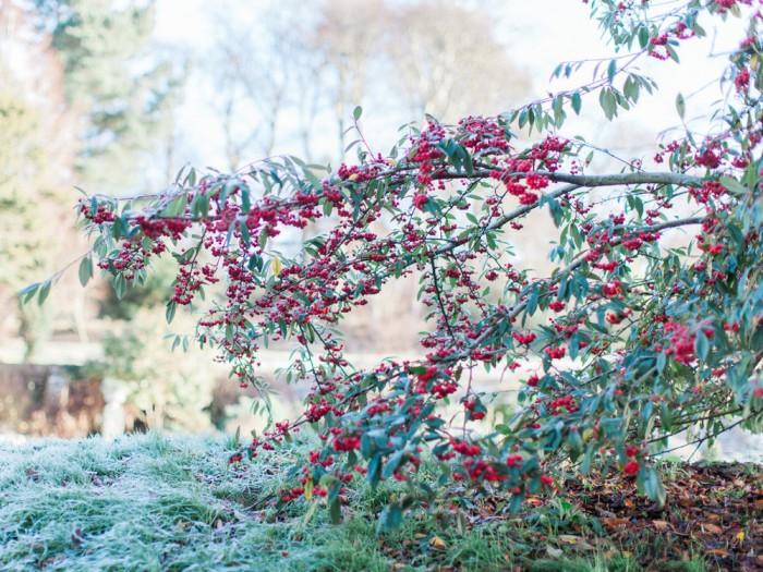 Warmwell-House-December-by-Imogen-Xiana-1
